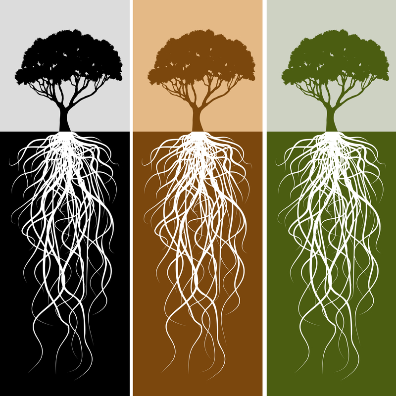 3 tree drawings