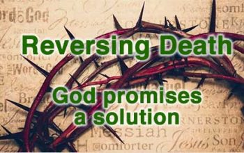 God reverses death by bringing a saviour to the world